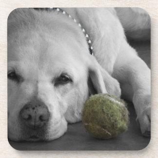 Labrador amarillo con la pelota de tenis vieja posavaso