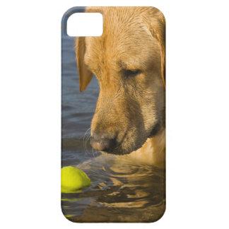 Labrador amarillo con una pelota de tenis en el ag iPhone 5 cárcasa