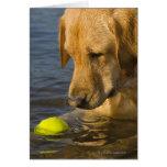 Labrador amarillo con una pelota de tenis en el ag felicitacion