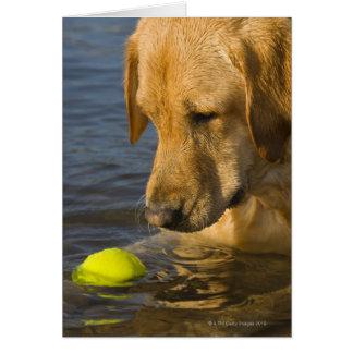 Labrador amarillo con una pelota de tenis en el ag tarjeta de felicitación