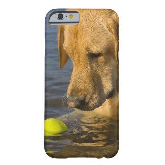 Labrador amarillo con una pelota de tenis en el funda de iPhone 6 barely there