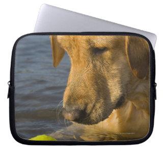 Labrador amarillo con una pelota de tenis en el funda computadora