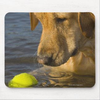 Labrador amarillo con una pelota de tenis en el tapete de ratones