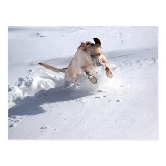 Labrador amarillo en la nieve tarjeta postal