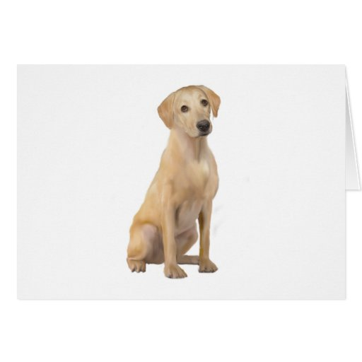 Labrador - amarillo (n) tarjeta de felicitación