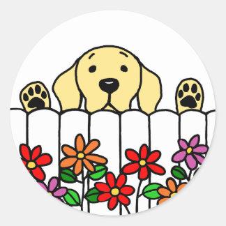 Labrador amarillo que le mira pegatina redonda