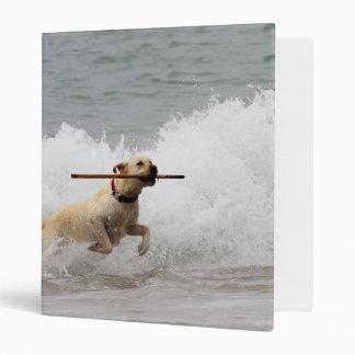 """¡Labrador - amarillo - vaya búsqueda! Carpeta 1"""""""