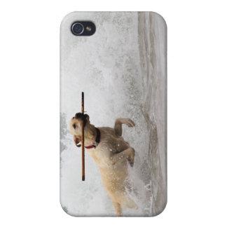 ¡Labrador - amarillo - vaya búsqueda! iPhone 4/4S Fundas