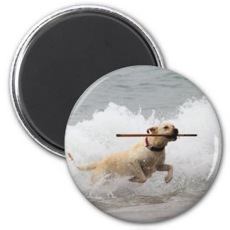 ¡Labrador - amarillo - vaya búsqueda! Imán Redondo 5 Cm