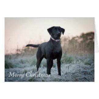 Labrador - Black Card