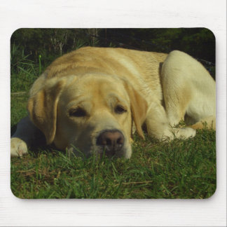 Labrador chilling on grass mouse pads