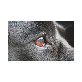 Labrador Close Up Canvas Print