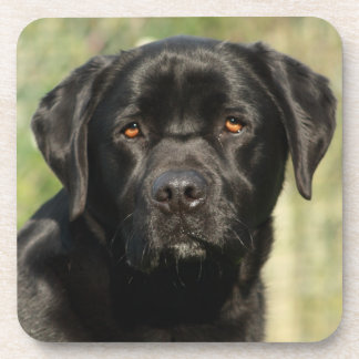 Labrador coasters with cork back - set of 6