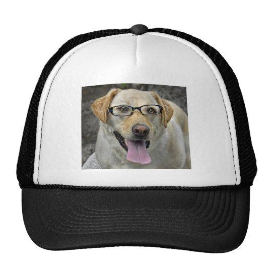 Labrador con el casquillo de la bola de vidrios de gorra