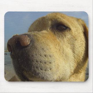 Labrador cute frontal face portrait mouse pad