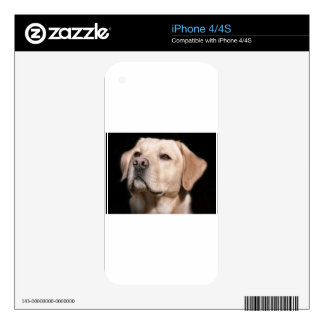 labrador decals for iPhone 4S