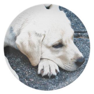 Labrador Dinner Plate