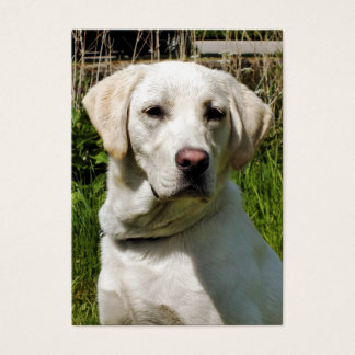 LABRADOR DOG BUSINESS CARD