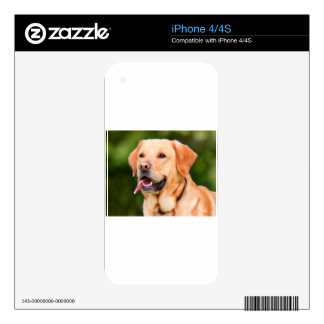 Labrador Dog Decals For The iPhone 4S