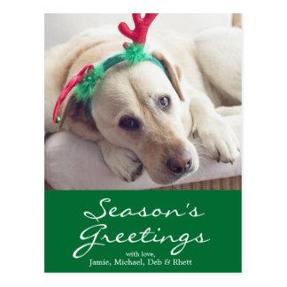 Labrador dog with Christmas ears Postcard