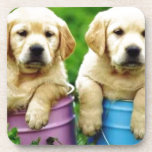 Labrador  dogs puppys  angie drink coaster