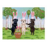 Labrador Easter Bunnies!! Postcard