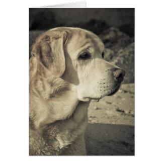 Labrador en el retrato de la playa tarjeta de felicitación