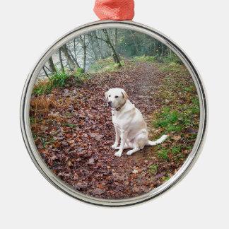 Labrador en los bancos del otoño adorno redondo plateado