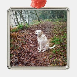 Labrador en los bancos del otoño adorno cuadrado plateado