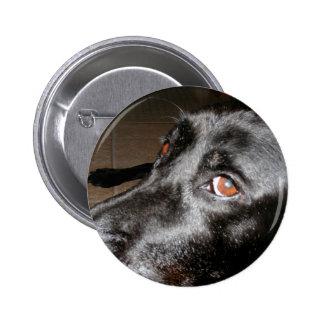 Labrador Eyes Pins