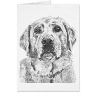 Labrador Face Drawing Card