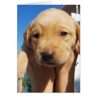 Labrador - GOOD MORNING! Card