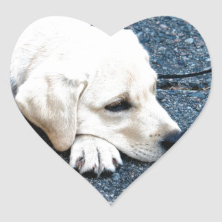 Labrador Heart Sticker