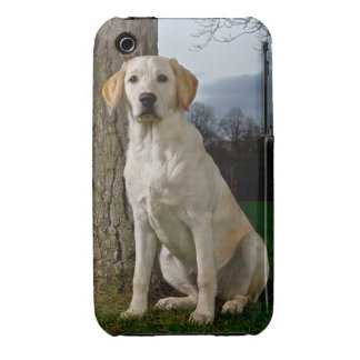 Labrador iPhone 3G/3GS Case Mate Barely  There
