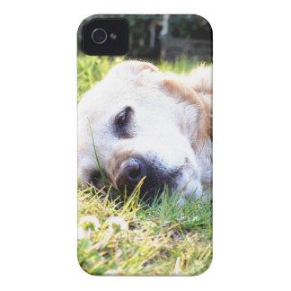 Labrador iPhone 4 Carcasa