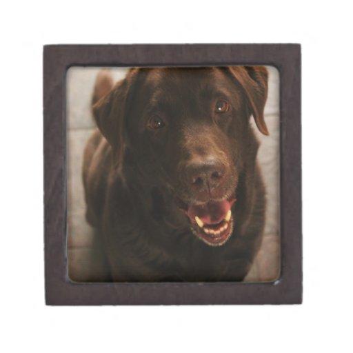 Labrador lindo cajas de recuerdo de calidad