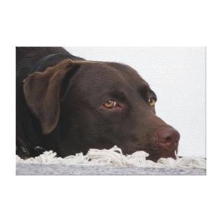 Labrador Lorenzo - - Leinwand Druck