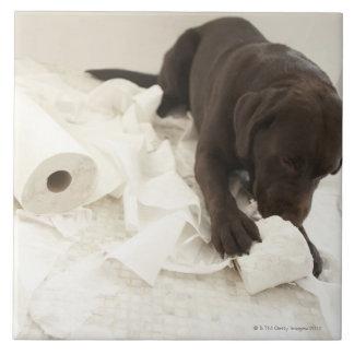 Labrador marrón azulejo cuadrado grande