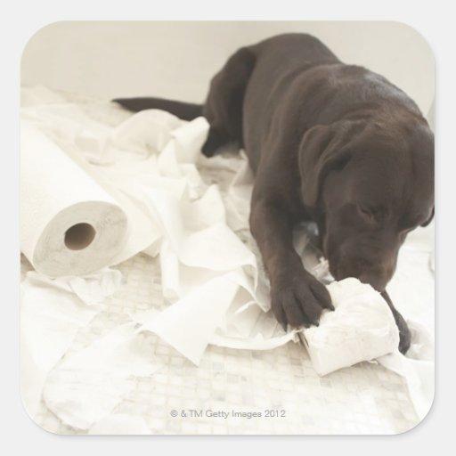 Labrador marrón pegatina cuadrada