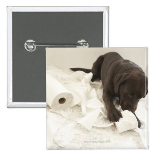 Labrador marrón pin cuadrado