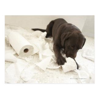 Labrador marrón postales
