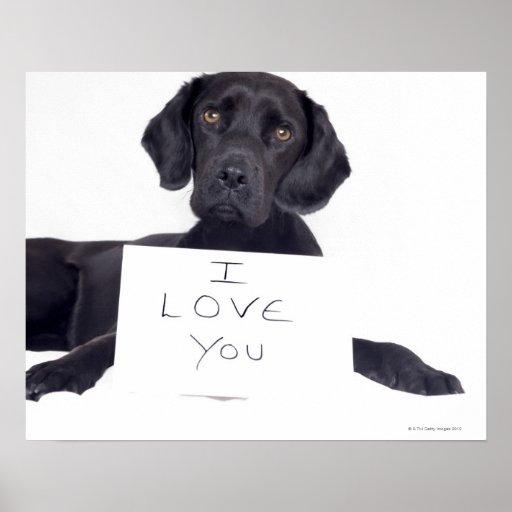Labrador negro 13 meses impresiones
