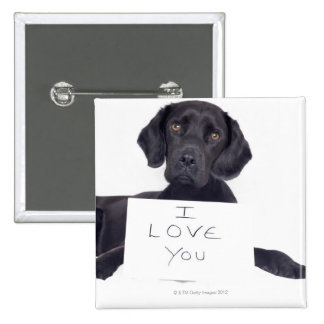 Labrador negro 13 meses pin cuadrado