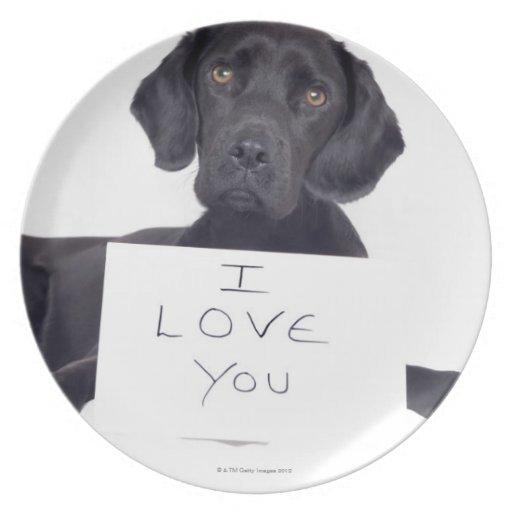 Labrador negro 13 meses platos