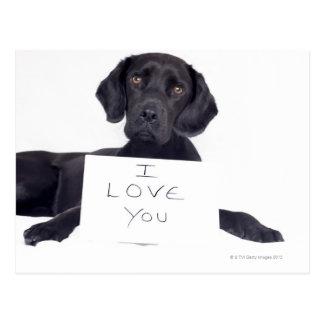 Labrador negro 13 meses tarjetas postales