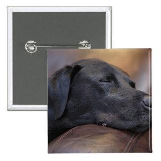 Labrador negro dormido en el sofá, primer pin cuadrado