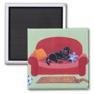 Labrador negro en el sofá rosado imán cuadrado