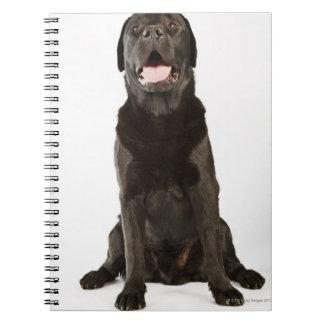 Labrador negro (familiaris del Canis), jadeando, Cuadernos