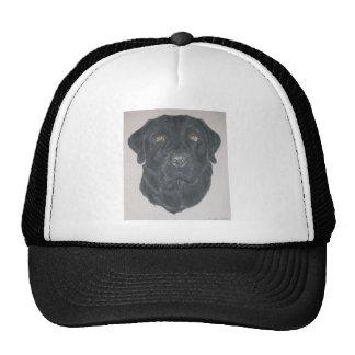 Labrador negro gorras