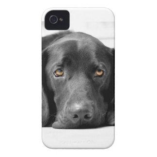 Labrador negro iPhone 4 carcasas